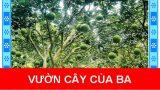 Vườn cây của ba