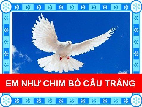 Em như chim bồ câu trắng
