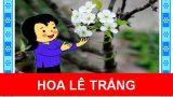 Hoa lê trắng