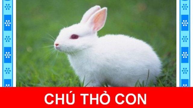 Chú thỏ con