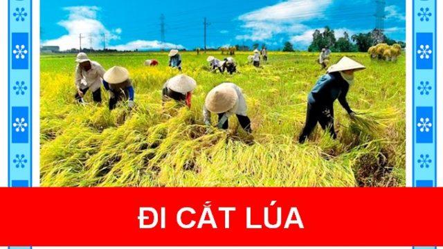 Đi cắt lúa