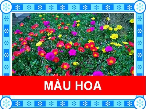 Màu hoa