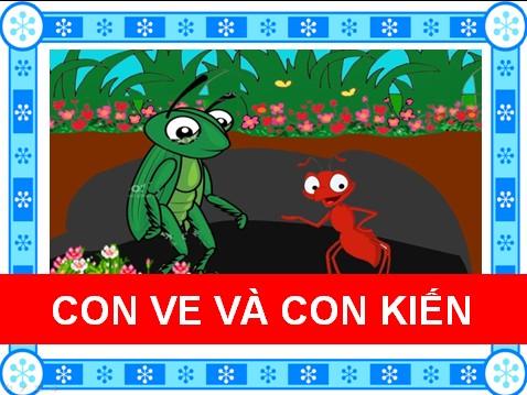 Con ve và con kiến